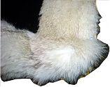 Pelzdecke Nr3 aus geschorenem Lamm und Fuchs - Detail