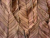 Pelzdecke Nr9 aus Nutria - Rückseite im Detail