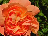 Rose Grahame Thomas