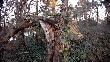 Noch ein geknickter Baum