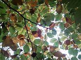 Herbststimmung unter der Buche