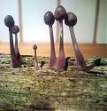Pelzige Pilze