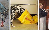 Futter für Wolf - Hund - Mensch
