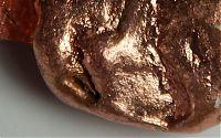 Kupferquellen in der Hundenahrung