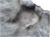|Foxtrott - Blaufuchs ganzfellig - Oberkante mit Wirbeln